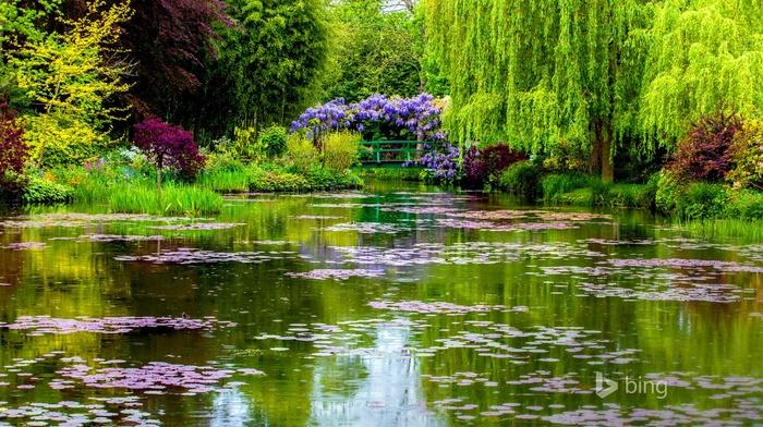 water, garden, plants, bridge, trees