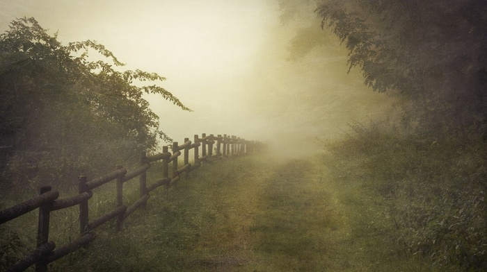 nature, landscape, path, mist, Germany, fence, canvas, shrubs, sunlight, morning, trees