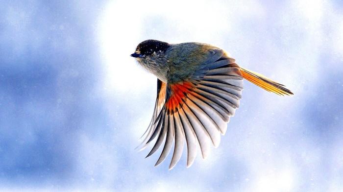 macro, birds