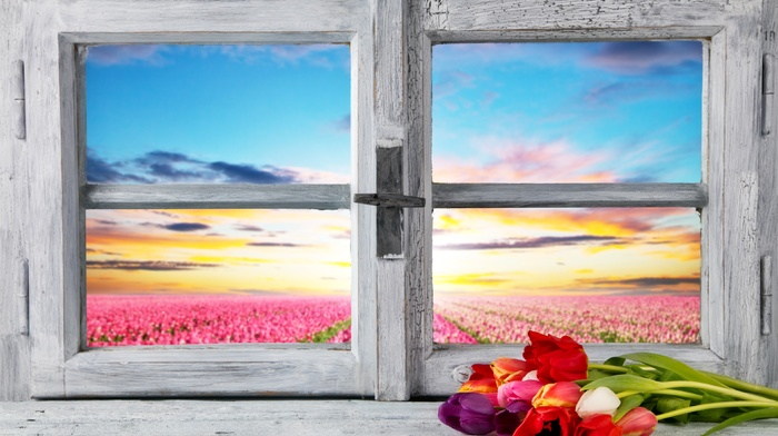 petals, window, nature, landscape, sunlight, wooden surface, clouds, flowers, tulips, field