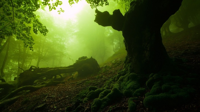 moss, forest, nature, mist, dead trees
