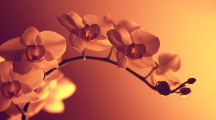 photography, macro, artificial lights, orange flowers