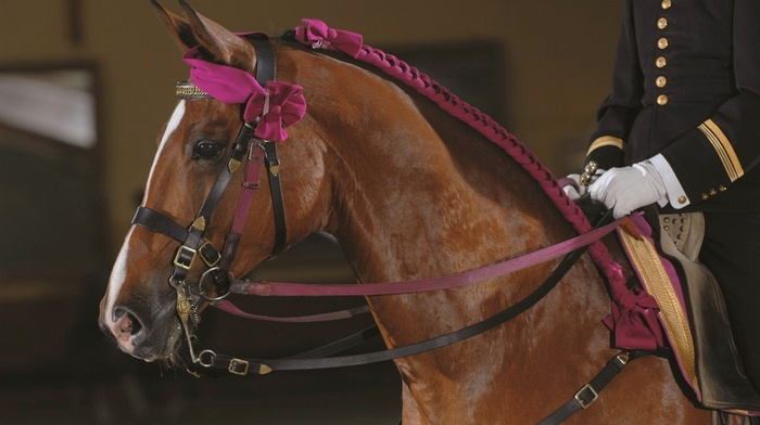 France, Equitation, Saumur, horse