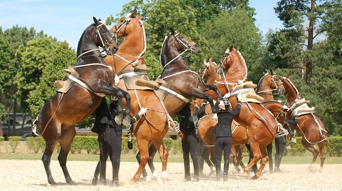 Equitation, Saumur, horse, France