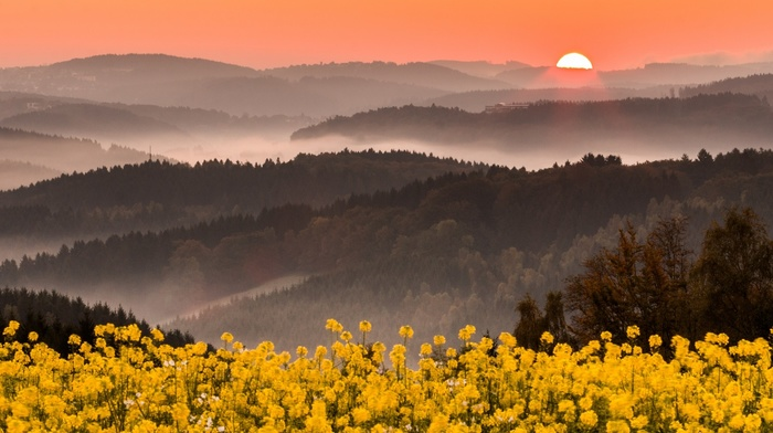 yellow, wildflowers, sky, landscape, flowers, mountains, nature, Germany, pink, forest, mist