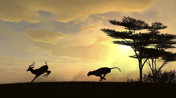 leopard animal, clouds, deer, trees, sunset, gazelle
