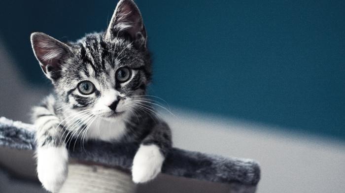 cat, baby, kittens, pet, macro, blurred