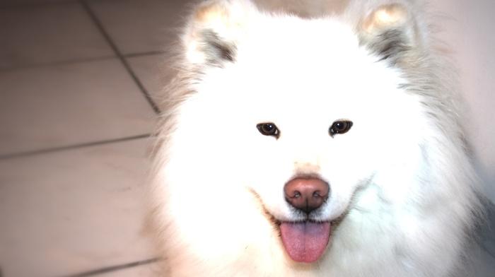 animals, white, dog, photography