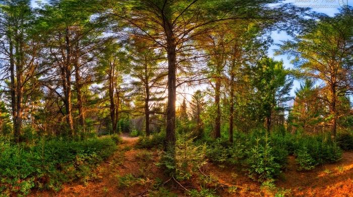 landscape, forest, nature, trees, shrubs, sunset, sunlight