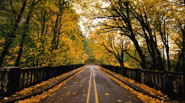 nature, road, forest