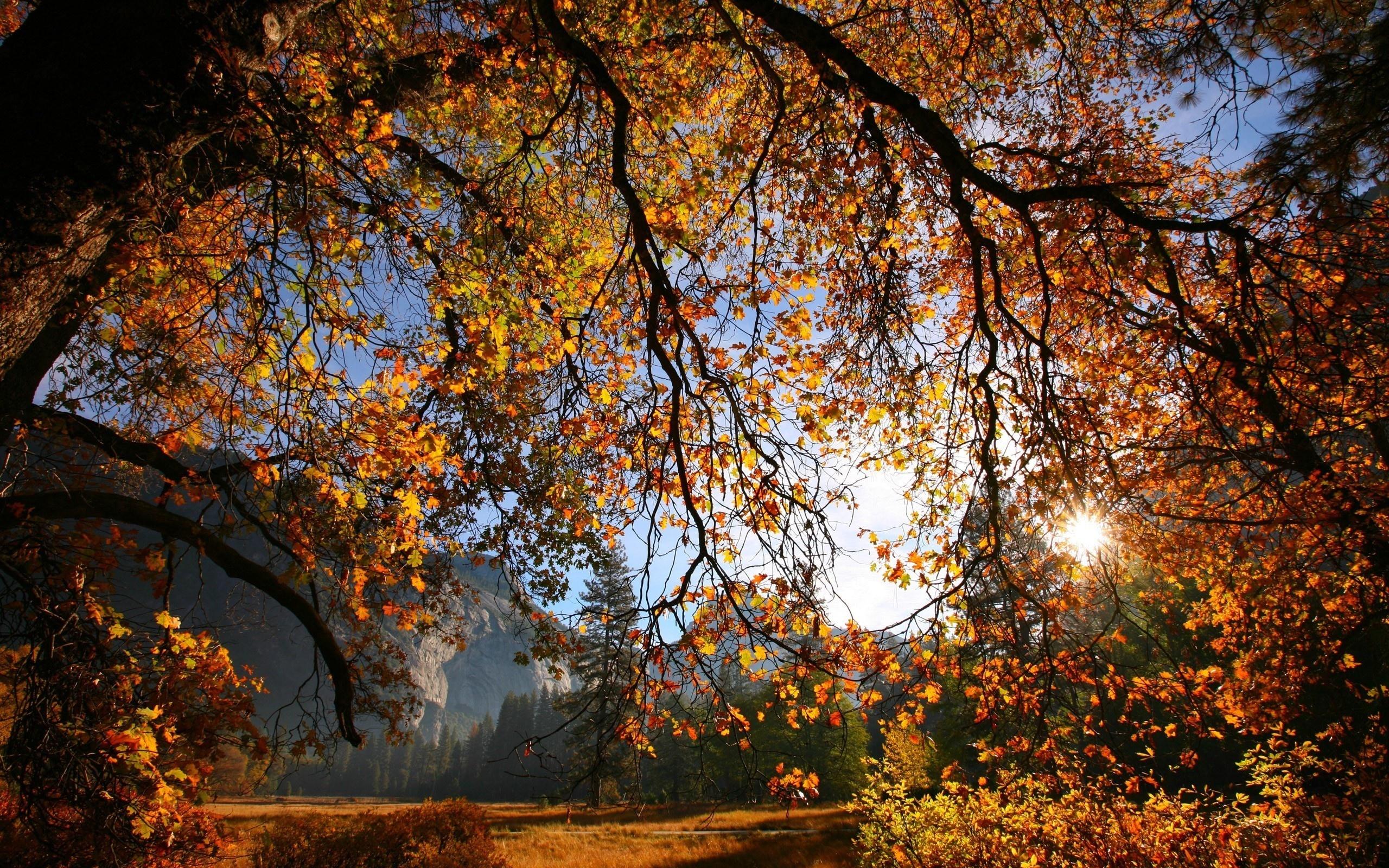 когда желтеют листья в архызе кожаные