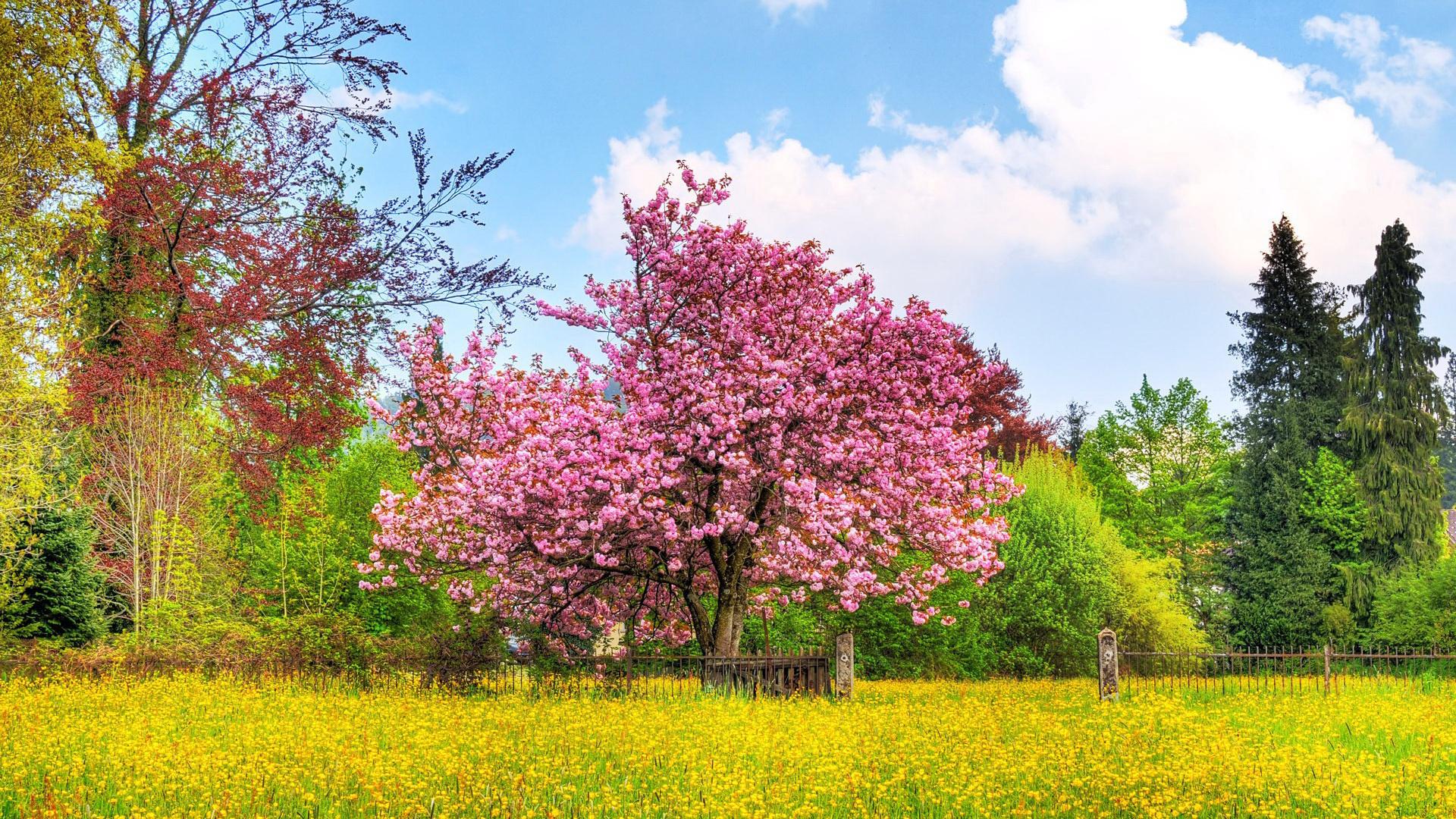 картинки, весна, цвета радуги, цветы, обои, красота