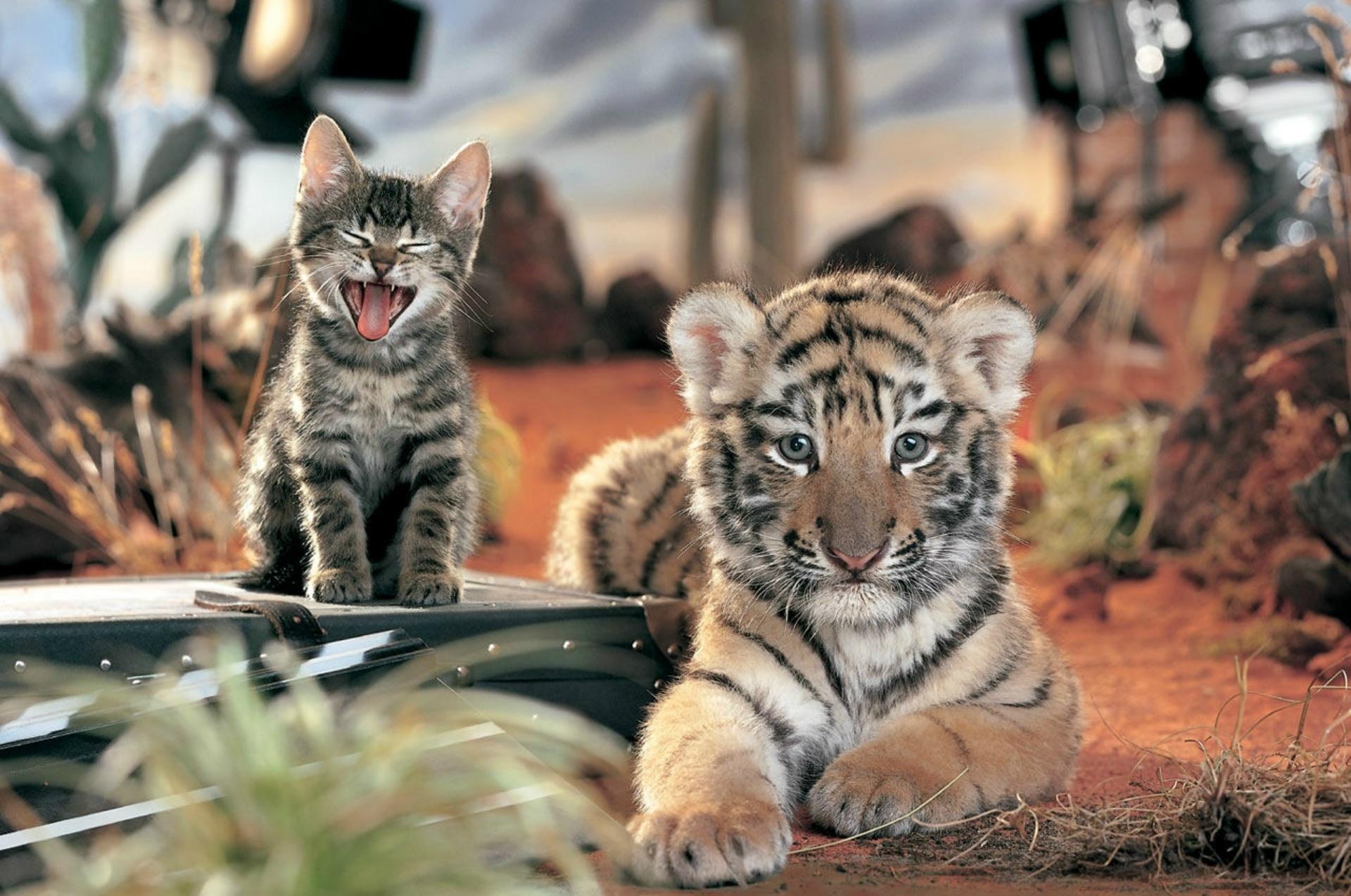фото, тигренок, природа, креатив, котенок, кошки