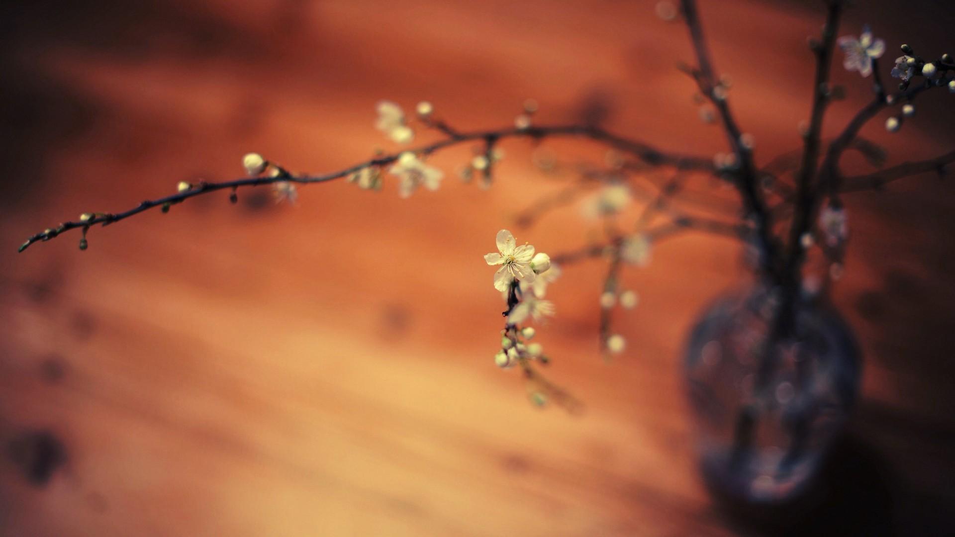 ветки, цветы, макро, глубина резкости