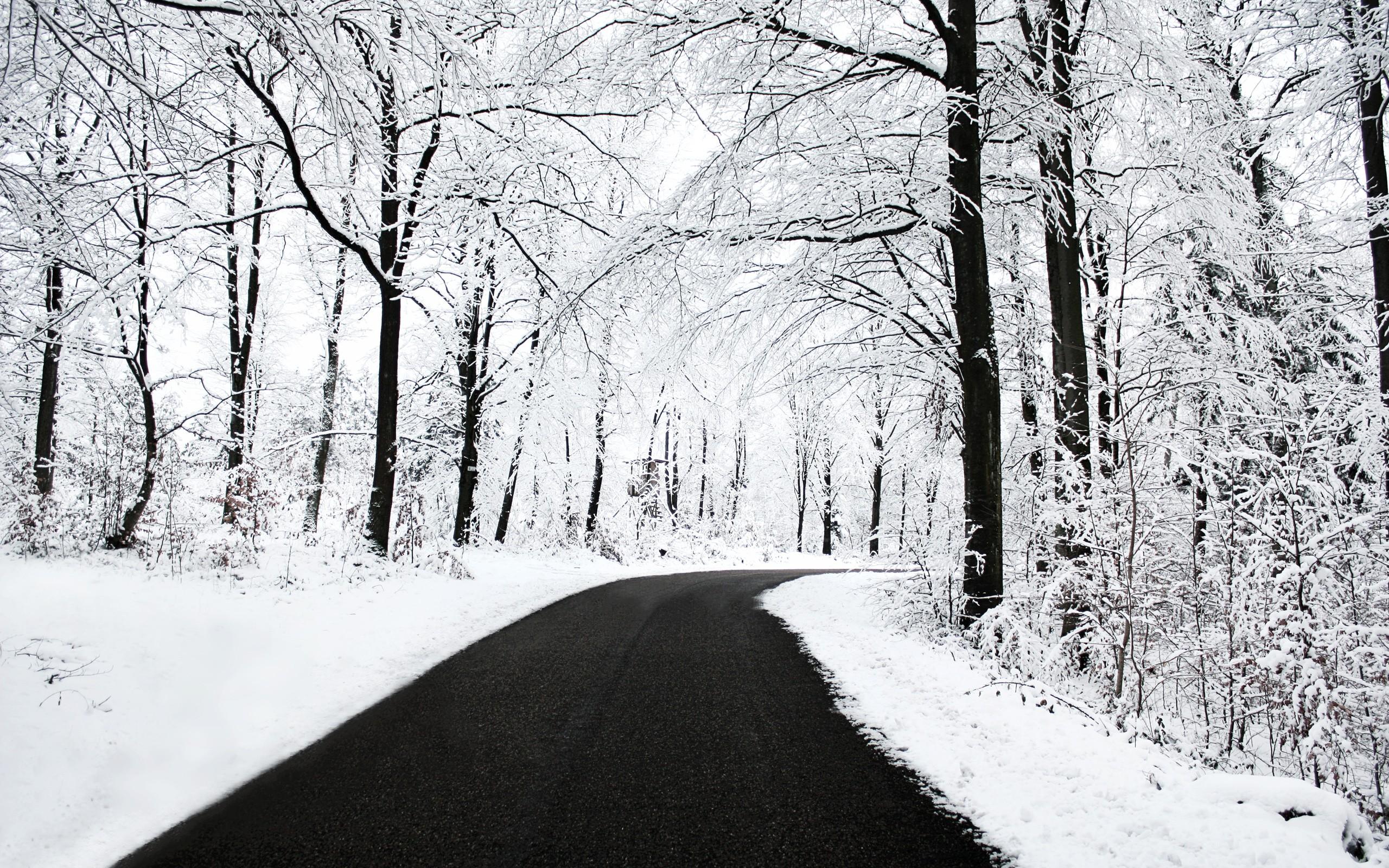 лес, дорога, снег