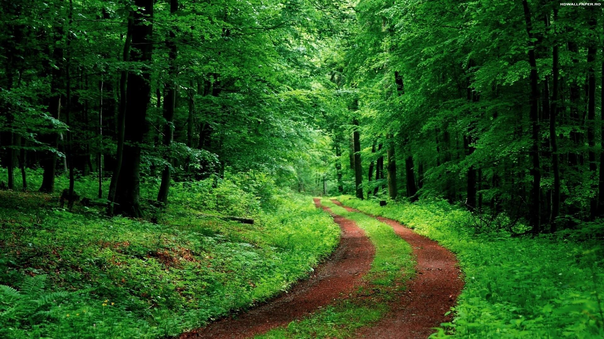 дорога, зеленый, деревья, природа