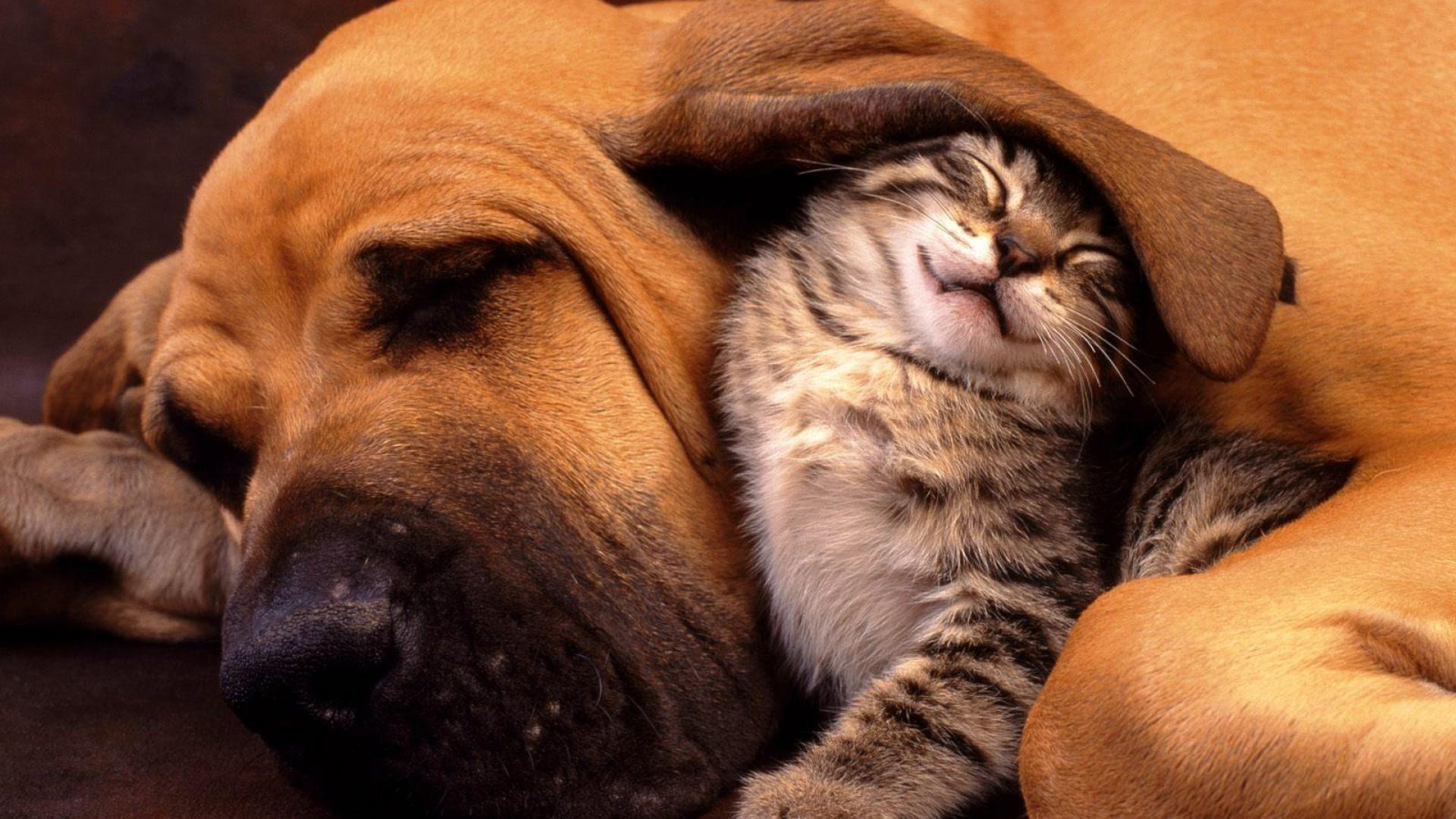 Nature Dog Hounds Friendship Kittens Cat