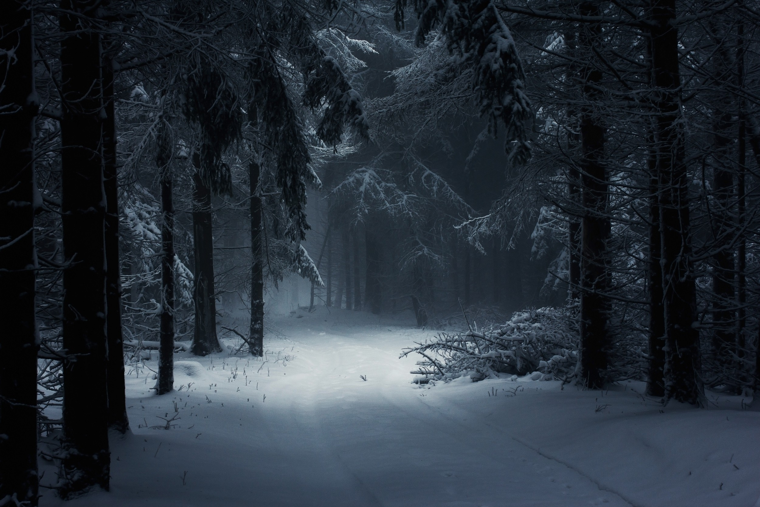 Fairy Tale Path Daylight Trees Forest Nature