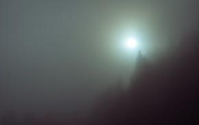 mist, fall, nature, trees