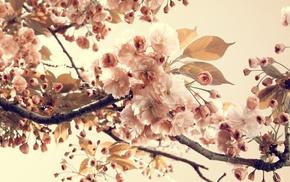 leaves, nature, twigs, flowers, vintage