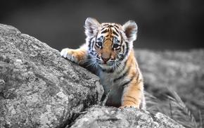 кошка, малыш, на камне, животные, Тигрёнок