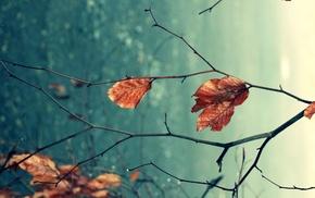 глубина резкости, листья, макро, природа