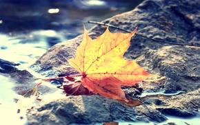 листья, глубина резкости, природа, макро