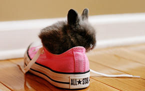 animals, shoes