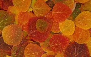 Apple Inc., leaves, fall