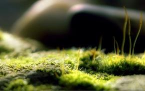 глубина резкости, природа, макро, мох
