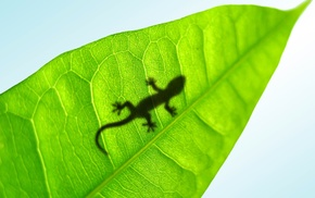 leaf, animals