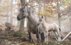 животные, деревья, лес, Лошадь