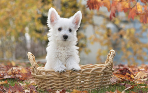 dog, basket, animals