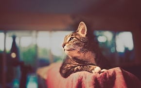 wallpaper, background, cat, images, animals