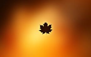 minimalism, autumn, leaf