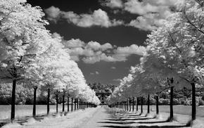 облака, Природа, аллея, горизонт, дорога, деревья