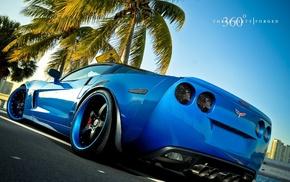 car, palm, cars, blue