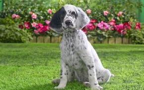 puppy, animals, grass, dog