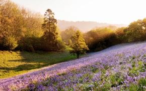 plants, flowers, nature, rays, trees