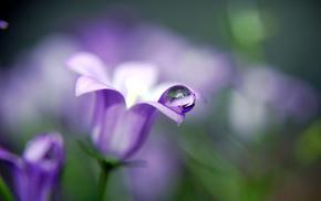plants, macro, drops, flower, flowers