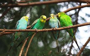 animals, twigs, birds