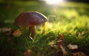 autumn, grass, macro, mushroom, foliage