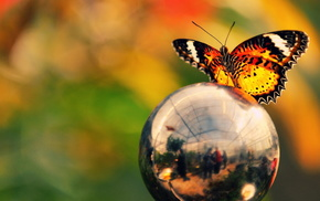 ball, colors, butterfly, reflection, macro