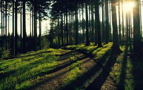 лучи света, деревья, вечер, солнце, лес, природа