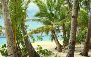 sea, sand, rest, palm trees, beach