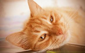 eyes, cat, animals, mustache