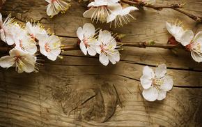board, tree, flowers, branch
