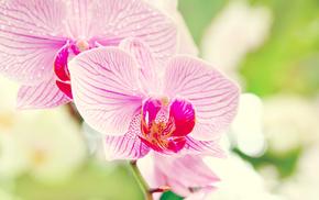 flowers, macro, flower