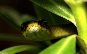 macro, snake, background, eyes, leaves