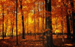 foliage, nature, autumn